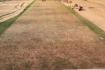 India vs England: మొతెరా పిచ్ను నాగలితో దున్నుతున్నారు.. క్యురేటర్పై మైకేల్ వాన్ సెటైర్స్