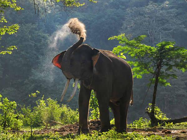 Elephant On The Pitch Sri Lanka S Plan Tackle Menace At Hambantota