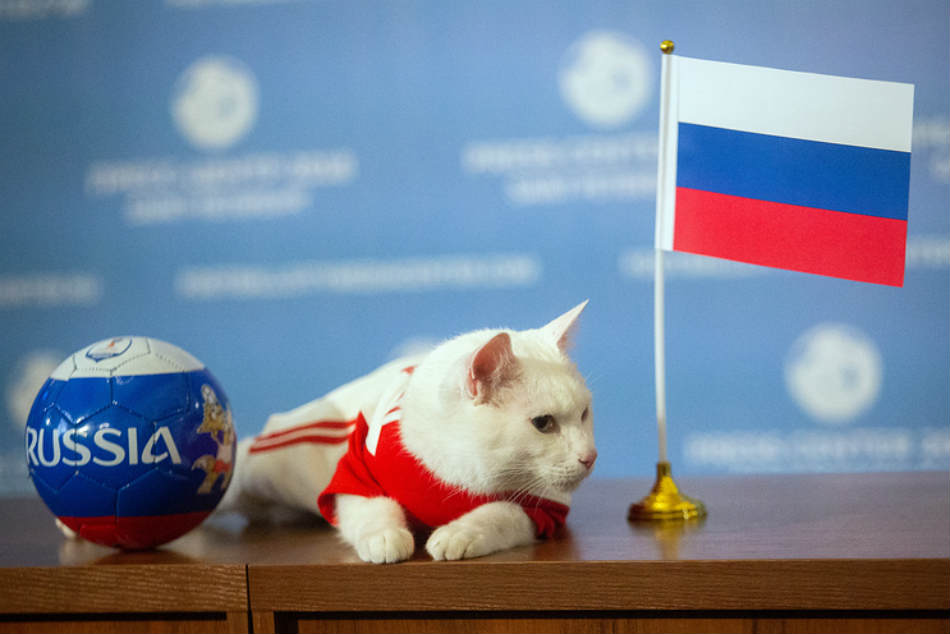 Fifa World Cup oracle Achilles the cat predicts Russia to win first match
