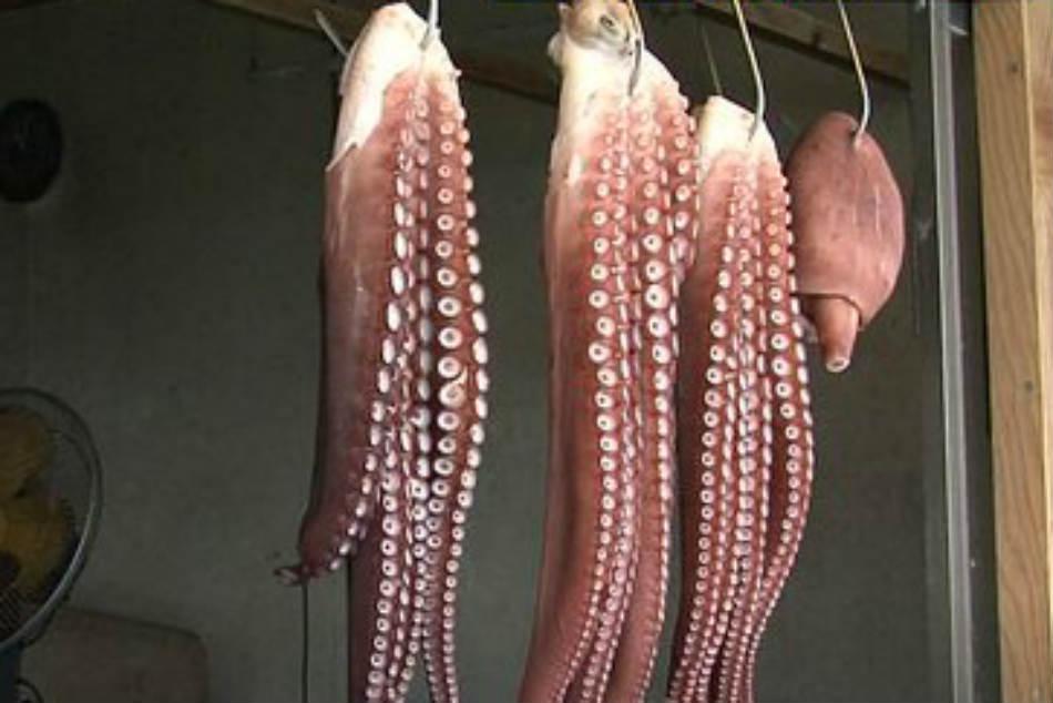 Japan S Psychic Octopus Killed Sent Market