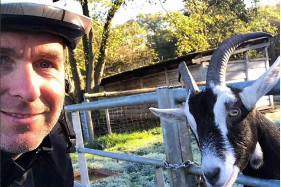 Michael Vaughan Clicks Picture With Goat Captions It Selfie With Virat Kohli