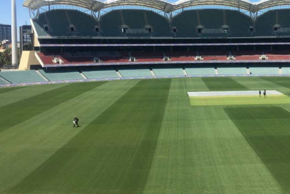 India vs Australia: Green pitch expected at Adelaide as curator promises to leave some grass for first Test