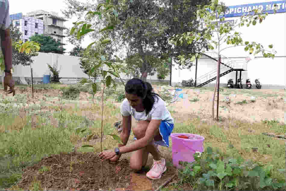 PV Sindhu participated in Green India Challenge and Planted 'Kadamba' Sapling at Gopichand Academy