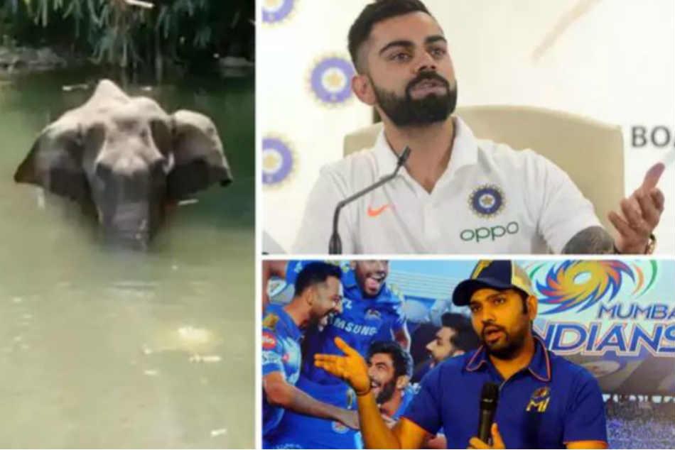 Rohit Sharma Virat Kohli React To Kerala Elephant S Death