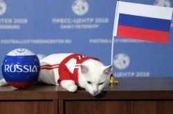 Russia S Psychic Cat Achilles Predicts The Winner The Opening World Cup Game
