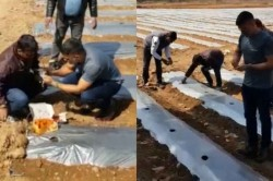 Ms Dhoni Turns Farmer Shares A Video Of Him Doing Organic Farming Of Watermelon