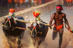 Kambala Jockey Srinivasa Gowda Turns Down Sports Minister Kiren Rijijus Invite For Sai Trials