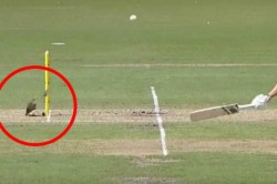 Stump Mic Cable Blocks A Run Out As Meg Lanning In A Never Seen Before Incident
