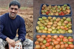 Ms Dhoni To Send Vegetables From His Farmhouse To Dubai
