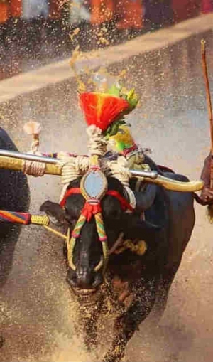 శాయ్ ట్రయల్స్కి నో.. భారత్ బోల్ట్ సంచలన ప్రకటన!!
